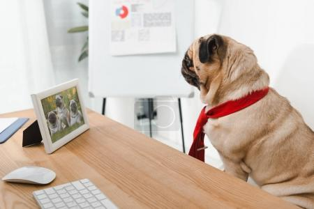 business dog looking at photo frame