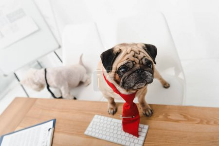 Business dog in office