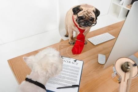 business dogs in office