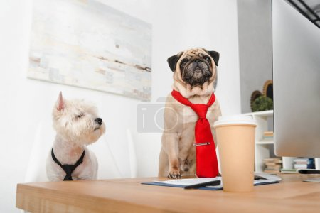 business dogs in neckties