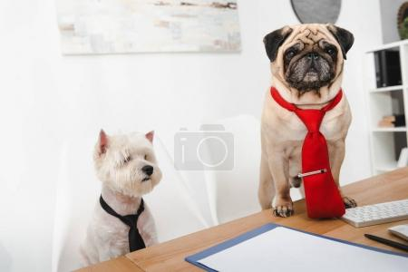 Business dogs