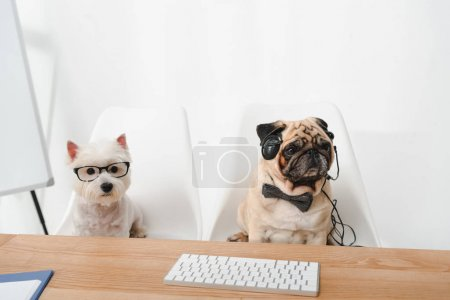 Business dogs at workplace