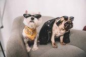 """Постер, картина, фотообои """"стильные собаки в солнцезащитные очки"""""""