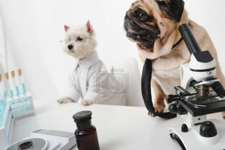 dogs scientists in lab