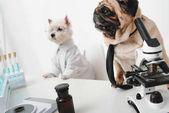 """Постер, картина, фотообои """"Ученые собаки в лаборатории"""""""