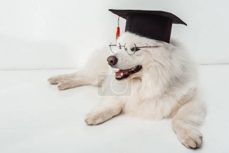 dog in graduation hat and eyeglasses