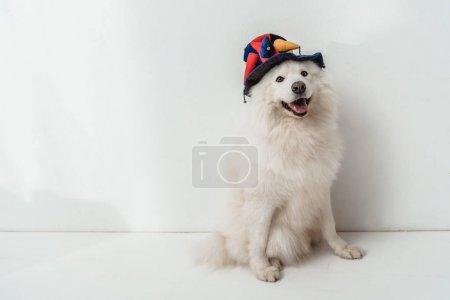 dog in funny hat