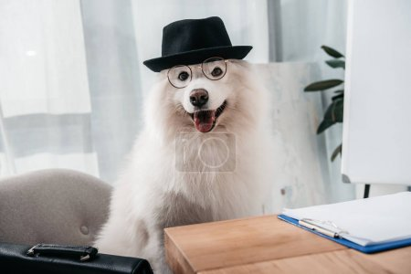 stylish business dog