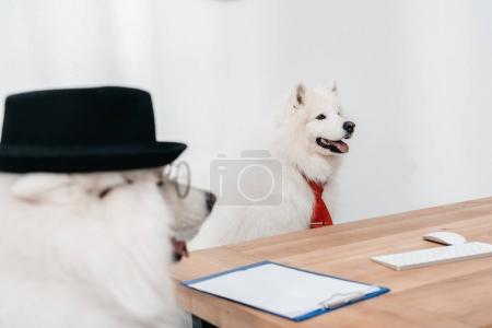Photo for Two business dogs having conversation at workplace - Royalty Free Image