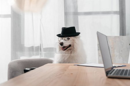 stylish dog in office
