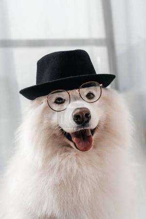 dog in hat and eyeglasses