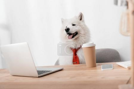 business dog with laptop