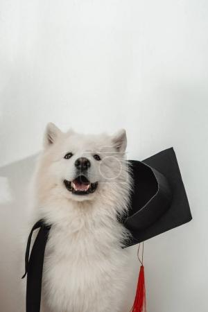 dog in graduation hat