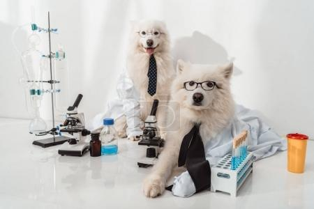 dogs scientists