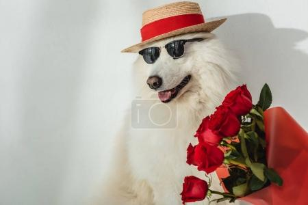 dog with red roses