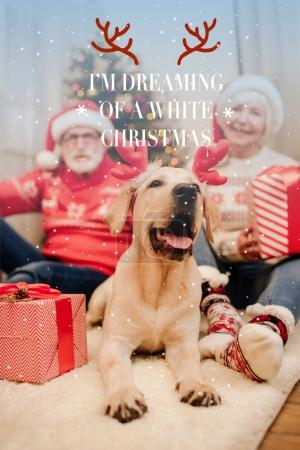 "Photo for Senior couple in christmas sweaters sitting on floor with gifts and labrador retriever dog, with ""Im dreaming of a white christmas"" lettering - Royalty Free Image"