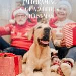 christmas greeting card with dog