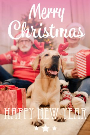 "Photo for Senior couple in christmas sweaters sitting on floor with gifts and labrador retriever dog, with ""merry christmas and happy new year"" lettering - Royalty Free Image"