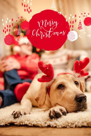 "Photo for Cute labrador retriever dog with christmas reindeer antlers, senior couple sitting behind, with ""merry christmas"" lettering - Royalty Free Image"