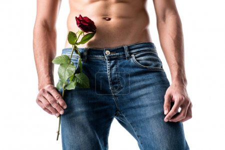 cropped image of man in jeans with flower isolated on white