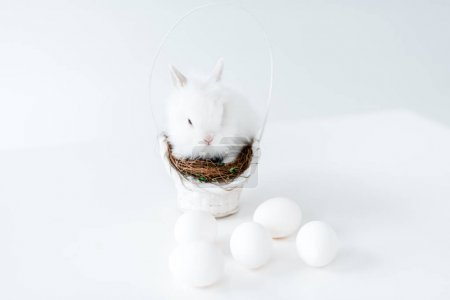 Photo for Adorable white rabbit on nest in basket and chicken eggs on white - Royalty Free Image