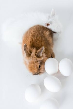 close-up view of adorable furry rabbits and chicken eggs on white