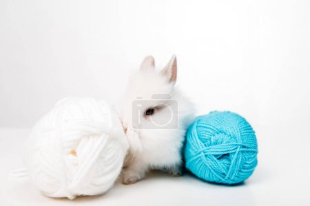 close-up view of adorable furry rabbit and balls of yarn isolated on white