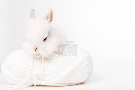 Photo for Close-up view of adorable furry rabbit and ball of yarn isolated on white - Royalty Free Image