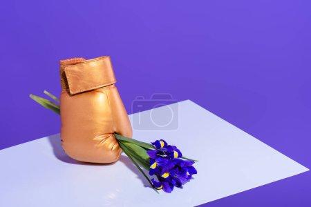 purple iris flowers in golden boxing glove