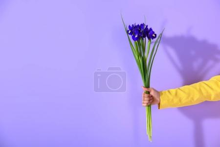 cropped view of female hand holding irises, on trendy ultra violet background