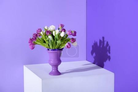 white and purple tulip flowers in vase on cube, ultra violet trend