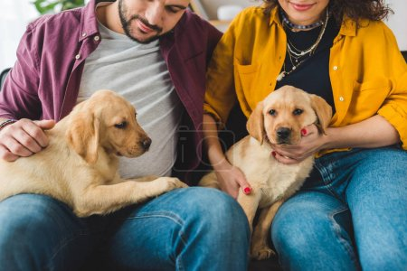 Partial view of young couple holding two labrador puppies