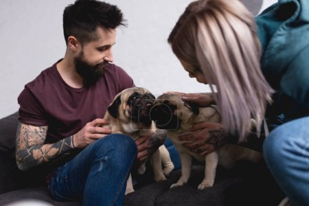 tattooed couple playing with pugs at home