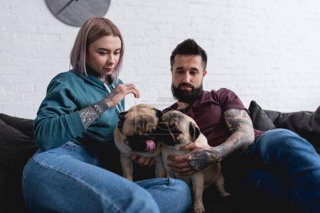Foto de Pareja tatuada sentado en el sofá con dos perros pug en casa - Imagen libre de derechos