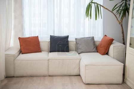 Photo for Couch with pillows of different colors and plant beside in modern living room - Royalty Free Image