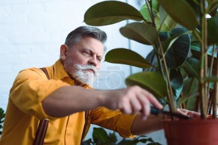 Photo pour Vue rapprochée du jardinier principal barbu travaillant avec une plante verte en pot à l'intérieur - image libre de droit