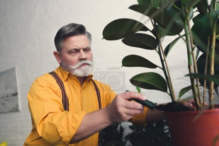 bearded senior man putting soil in pot with green plant