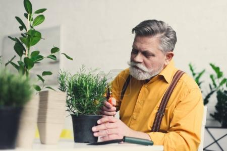 handsome bearded senior man cutting green potted plant at home