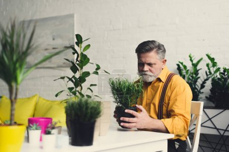stylish bearded senior man holding green houseplant at home