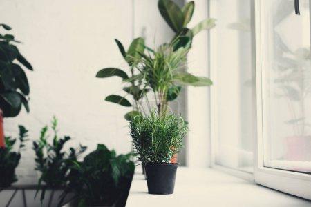 Foto de Hermosas plantas en maceta verde en el alféizar de la ventana - Imagen libre de derechos