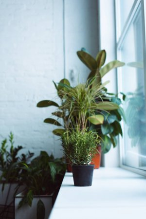 beautiful green plants in pots on windowsill