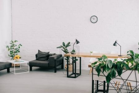 Photo for Interior of modern office with furniture, plants and clock on wall - Royalty Free Image