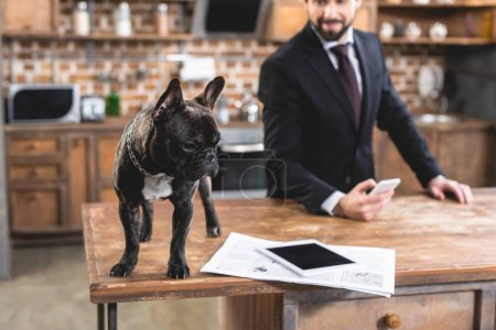 loner businessman looking at bulldog on table at kitchen