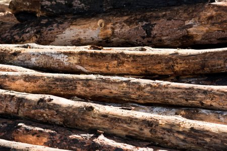 full frame image of timber logs placed in row
