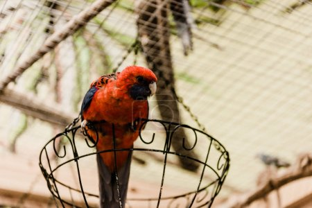 Photo for Red parrot sitting on metallic cage in zoo - Royalty Free Image