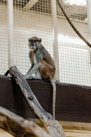 Photo pour Foyer sélectif de singe mignon assis près de la cage - image libre de droit