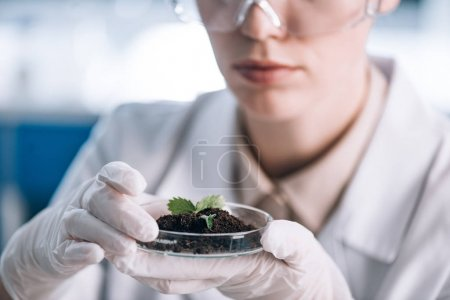 Photo for Cropped view of biochemist holding glass with ground and green leaves - Royalty Free Image