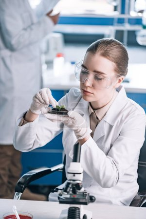 Photo for Attractive biochemist holding glass with ground and green leaves - Royalty Free Image