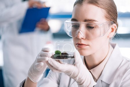 Photo for Selective focus of attractive biochemist in goggles looking at green plant - Royalty Free Image