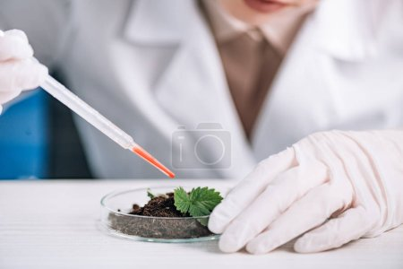 Photo for Cropped view of biochemist holding pipette near green plant - Royalty Free Image